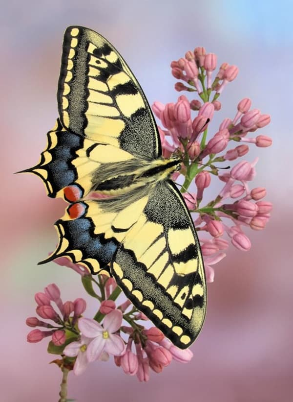 beautiful picturesof flower and butterflies (15)
