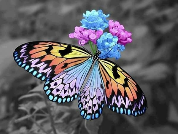 beautiful picturesof flower and butterflies (16)