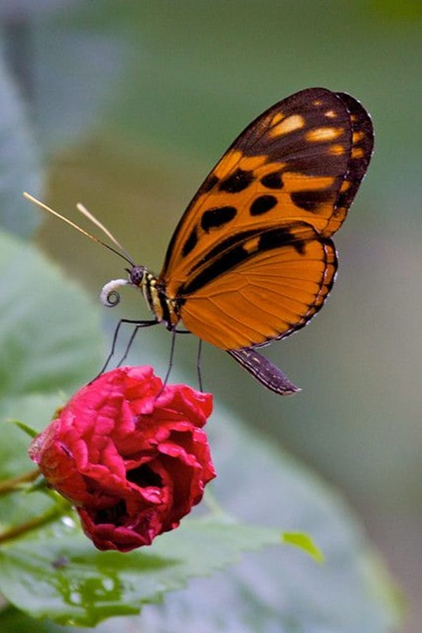 beautiful picturesof flower and butterflies (17)