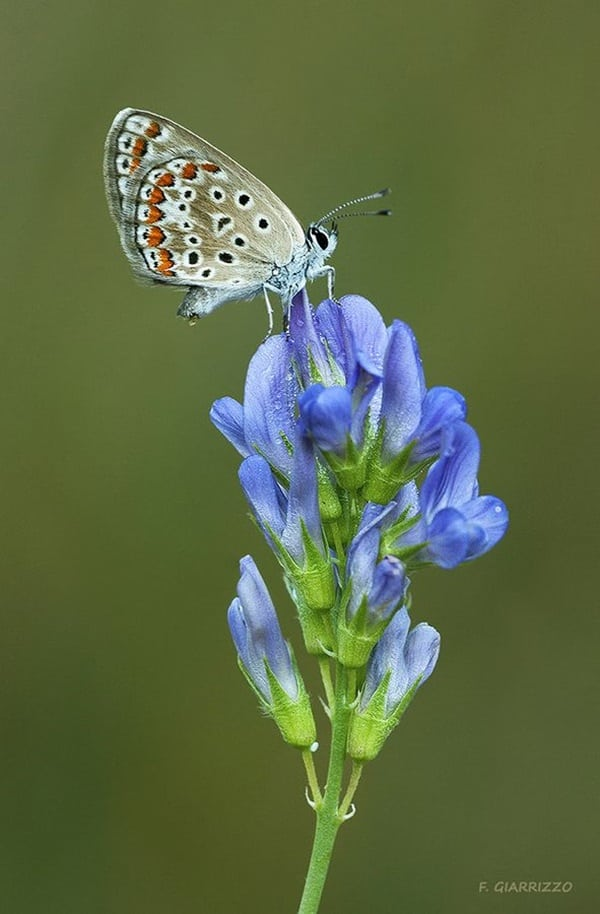 beautiful picturesof flower and butterflies (18)