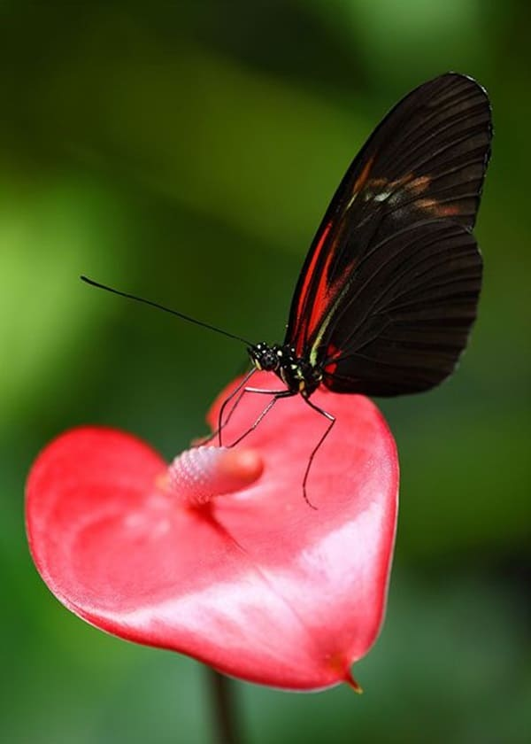 50 Beautiful Pictures Of Flowers And Butterflies