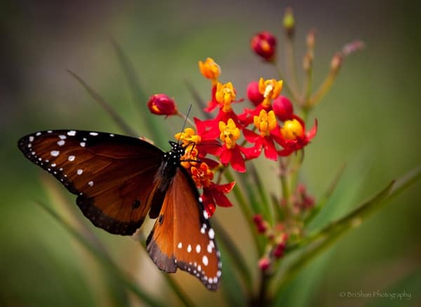 beautiful picturesof flower and butterflies (2)