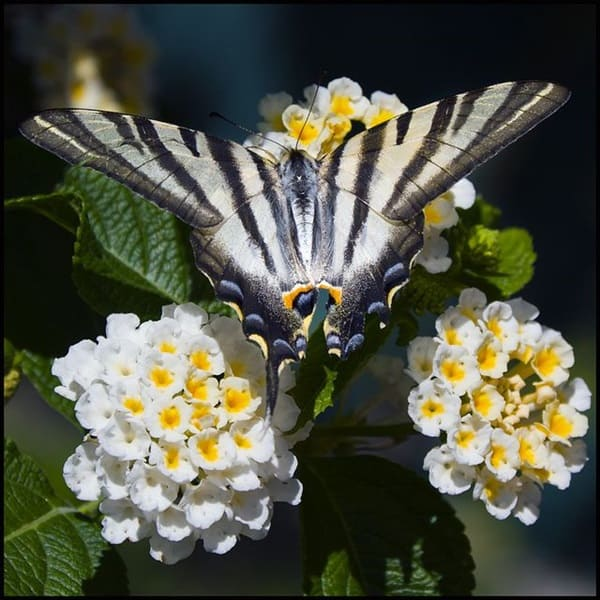 beautiful picturesof flower and butterflies (21)