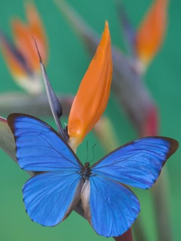 beautiful picturesof flower and butterflies (22)