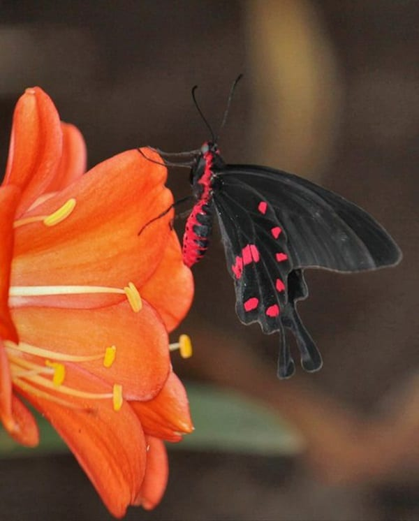 beautiful picturesof flower and butterflies (23)