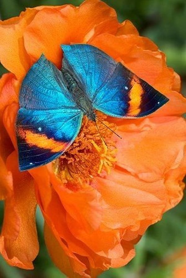 beautiful picturesof flower and butterflies (24)