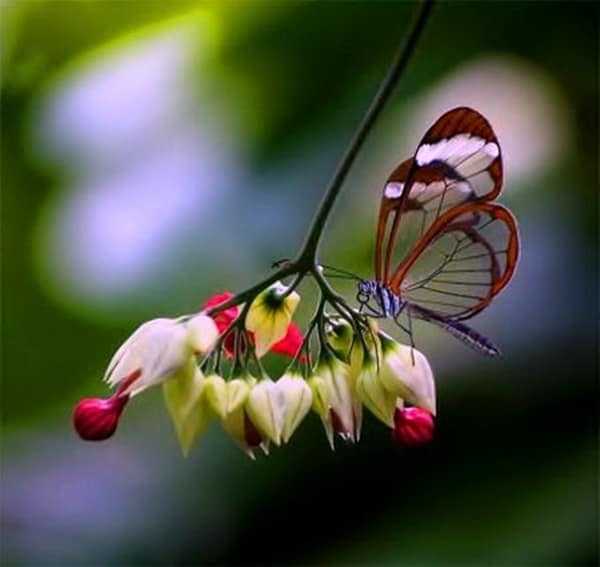 beautiful picturesof flower and butterflies (25)