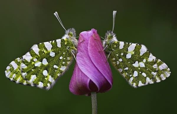 beautiful picturesof flower and butterflies (26)