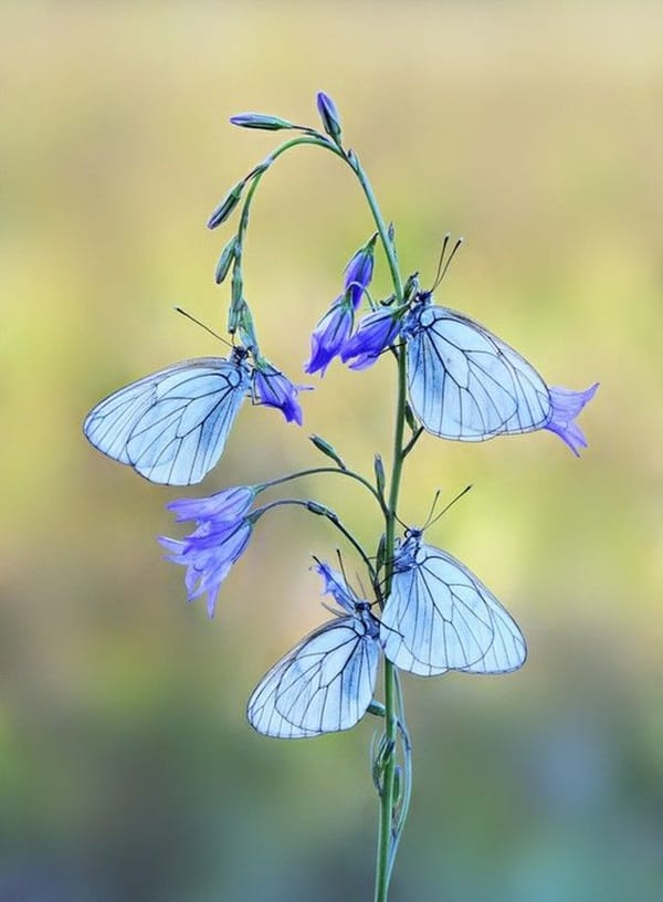beautiful picturesof flower and butterflies (27)