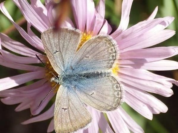 beautiful picturesof flower and butterflies (29)