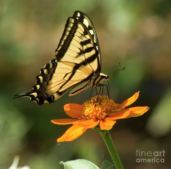 beautiful picturesof flower and butterflies (3)