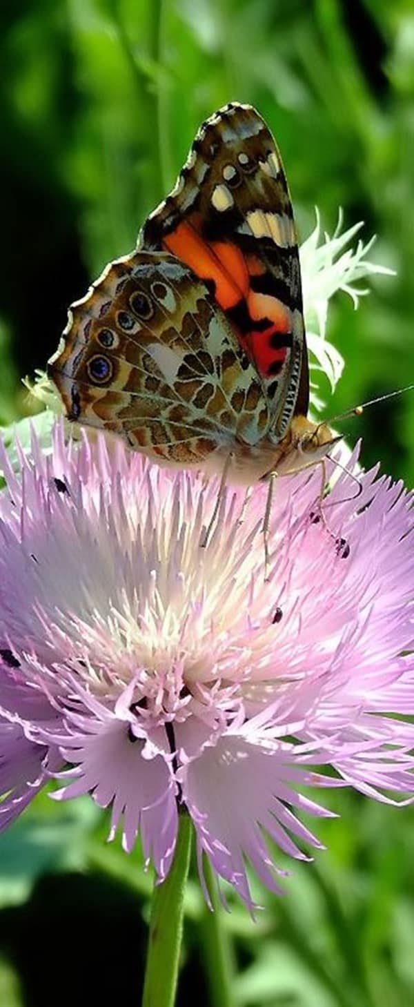 beautiful picturesof flower and butterflies (30)