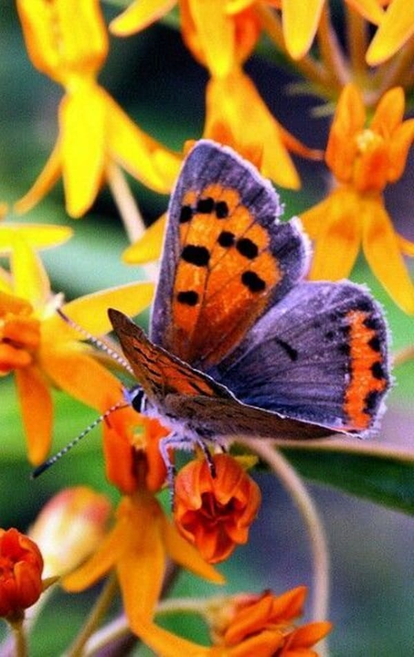 beautiful picturesof flower and butterflies (33)