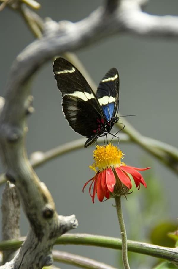 beautiful picturesof flower and butterflies (35)