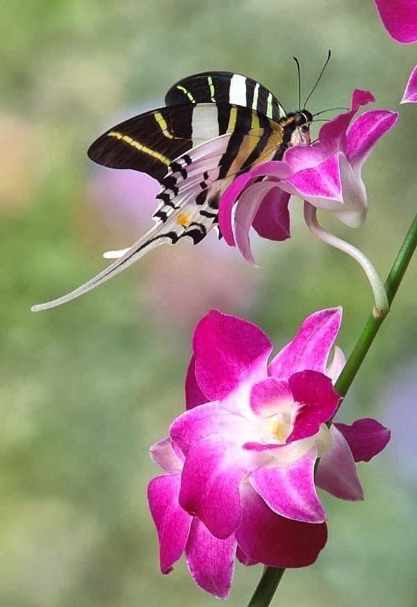 beautiful picturesof flower and butterflies (36)