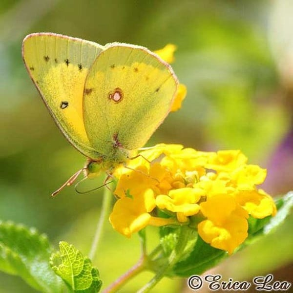 beautiful picturesof flower and butterflies (37)