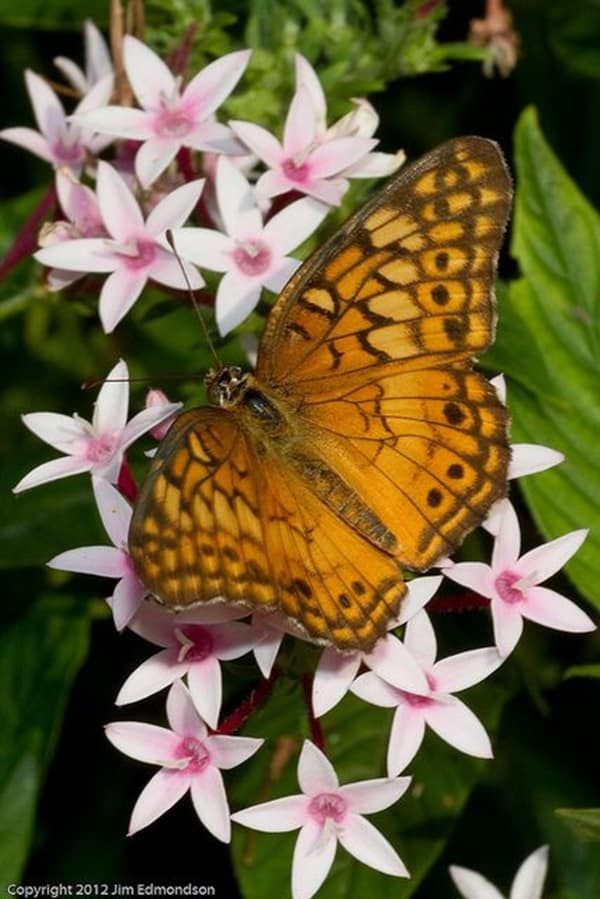 beautiful picturesof flower and butterflies (38)
