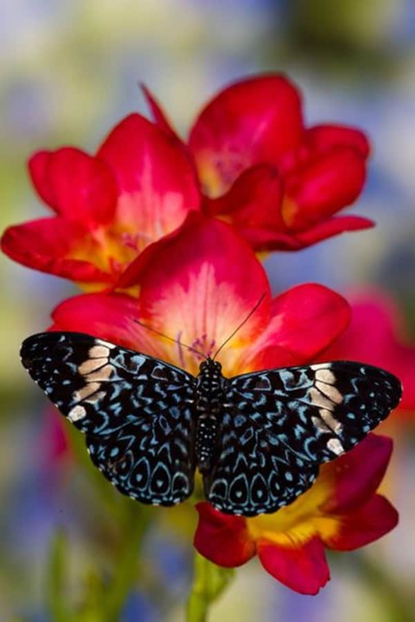 beautiful picturesof flower and butterflies (41)