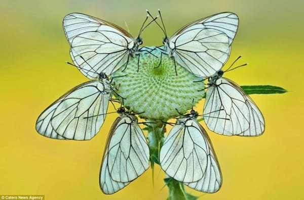 beautiful picturesof flower and butterflies (42)