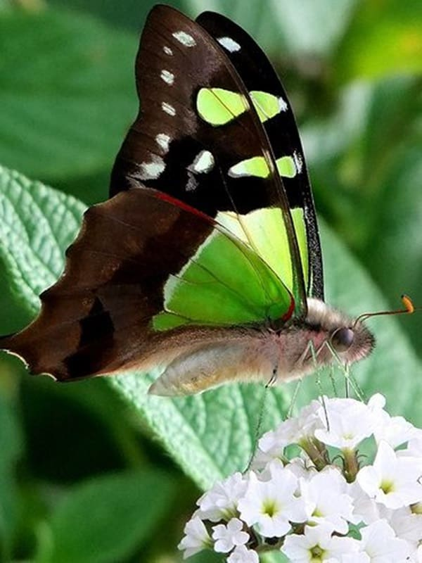 beautiful picturesof flower and butterflies (43)