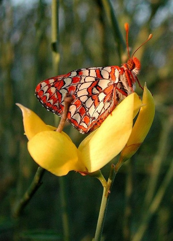 beautiful picturesof flower and butterflies (45)