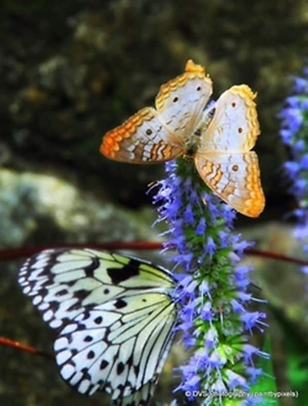 beautiful picturesof flower and butterflies (47)