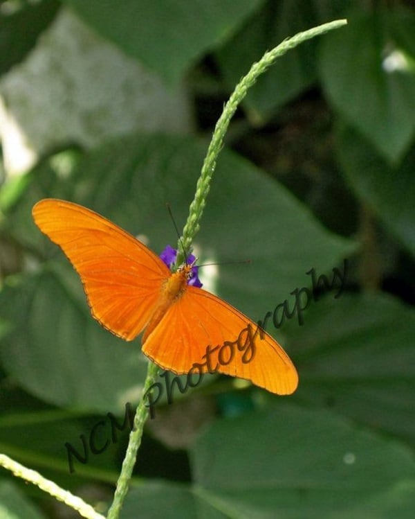 beautiful picturesof flower and butterflies (48)