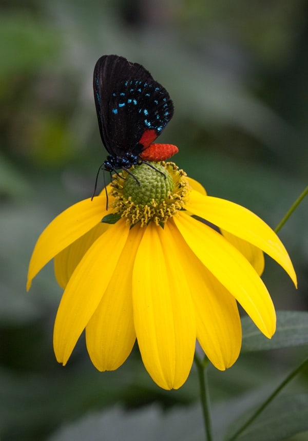 beautiful picturesof flower and butterflies (50)
