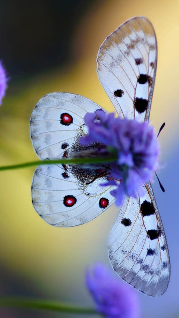 beautiful picturesof flower and butterflies (51)