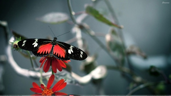 beautiful picturesof flower and butterflies (6)