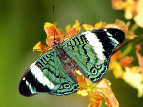 beautiful picturesof flower and butterflies (7)