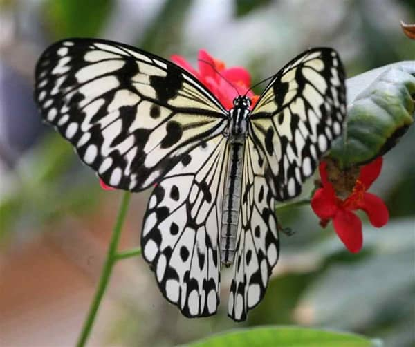 beautiful picturesof flower and butterflies (8)