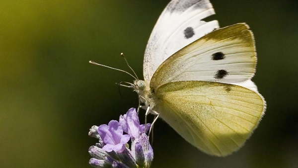 beautiful picturesof flower and butterflies (9)