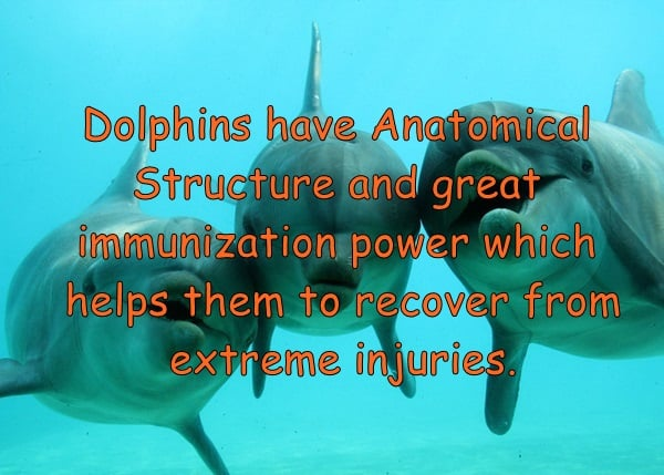 Amazing facts about dolphins (1)