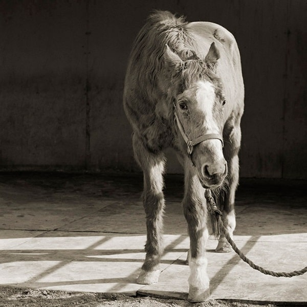 Beautiful Pictures Of Old Age Animals (1)