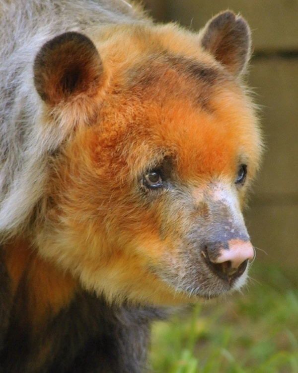 Beautiful Pictures Of Old Age Animals (16)
