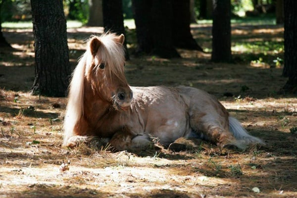 Beautiful Pictures Of Old Age Animals (2)