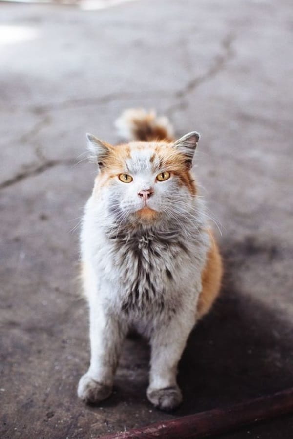 Beautiful Pictures Of Old Age Animals (36)