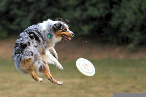 Best and Smart Dog Breeds (5)