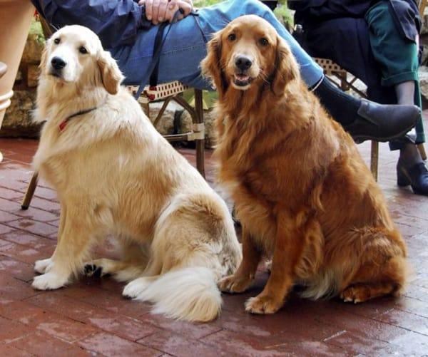 Best and Smart Dog Breeds (9)