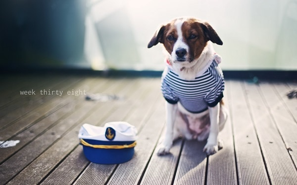 Cute Pictures of animals on duty     (2)