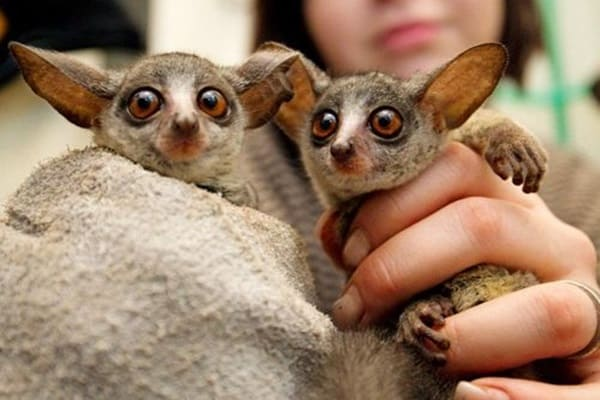 Exotic Animals That can be Your Pet (2)
