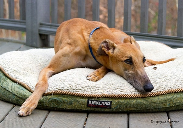Home Remedies For Arthritis In Dogs (1)