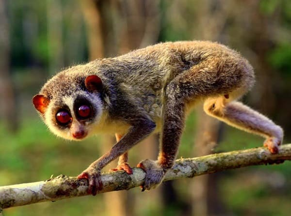 Most Amazing Animals on Earth (4)