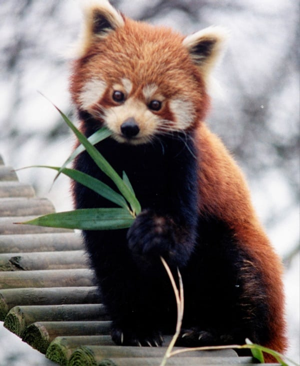 Most Amazing Animals on Earth (7)