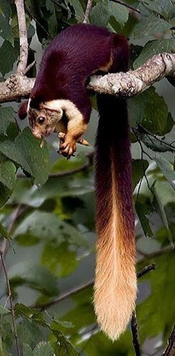 Pictures of Animals That Use Their Tails For Many Purpose (19)