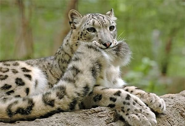 Pictures of Animals That Use Their Tails For Many Purpose (2)