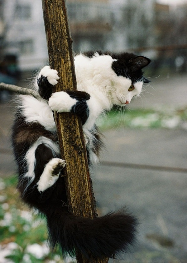 Pictures of Animals That Use Their Tails For Many Purpose (4)