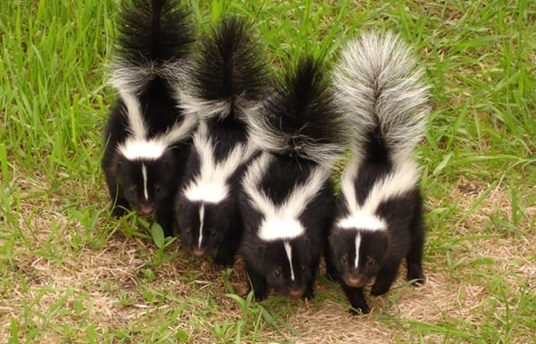 Pictures of Animals That Use Their Tails For Many Purpose (6)