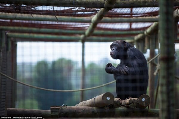 Sad Wild Animals in Zoo (6)